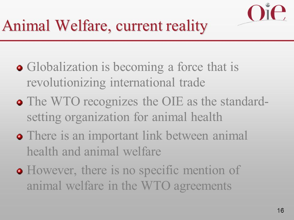Animal Welfare, current reality