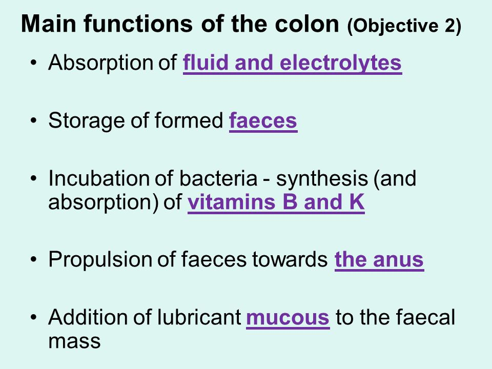The Large Bowel And Elimination Of Faeces Ppt Video Online Download