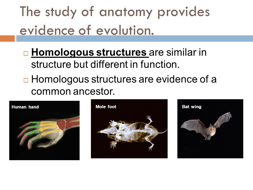 How Does Anatomy Provide Evidence For Evolution Images - human body ...