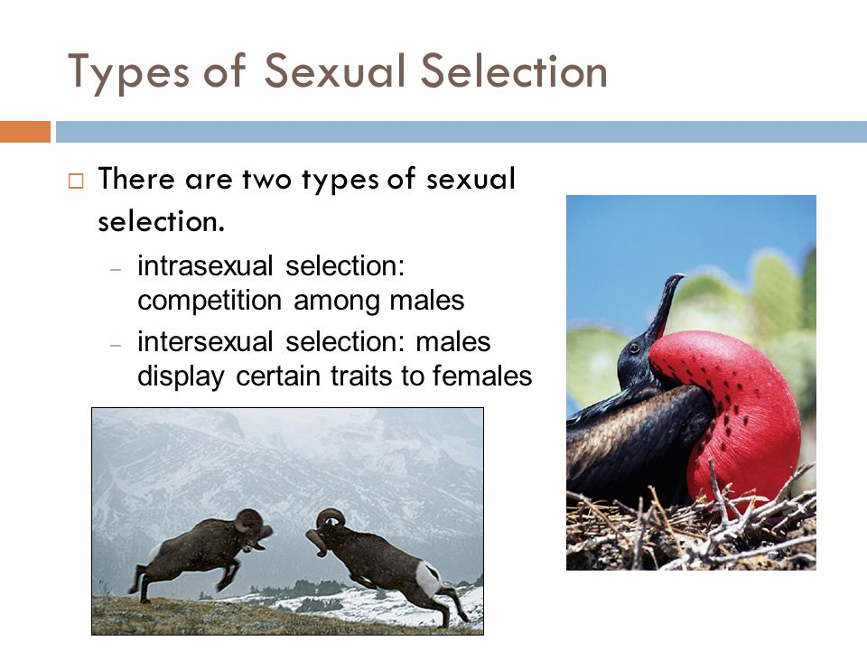 Define intersexual selection biology