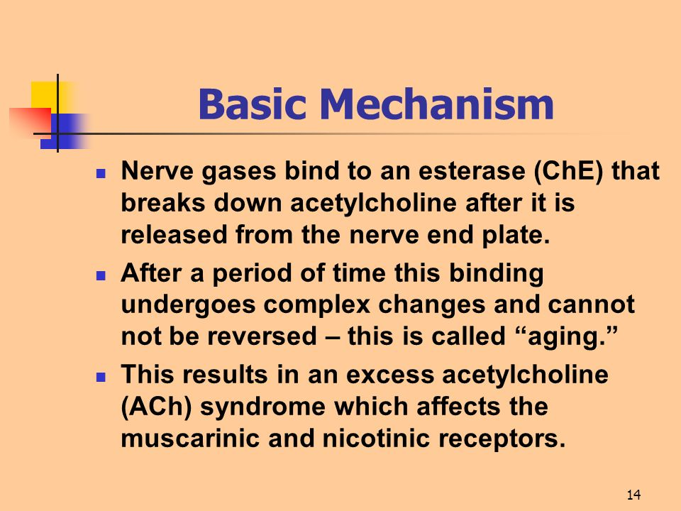Basic Mechanism Nerve gases bind to an esterase (ChE) that breaks down acetylcholine after it is released from the nerve end plate.