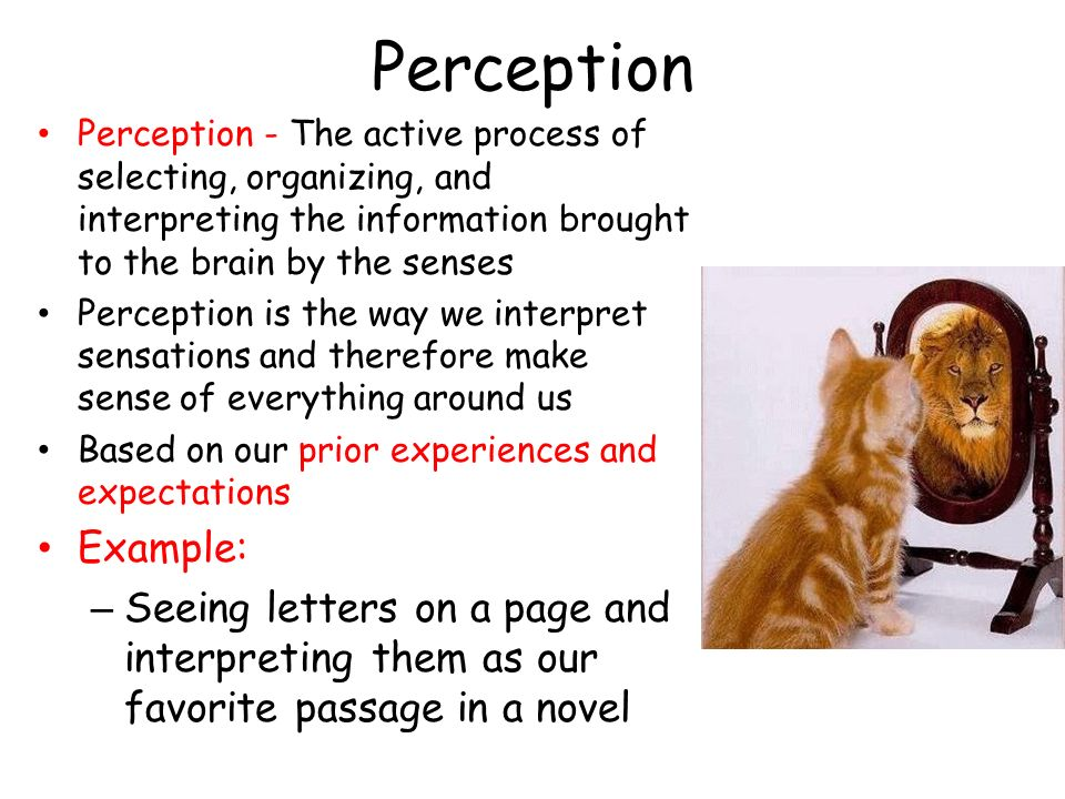 sensation perception and attention essay Sensation, perception, and attention sensation, perception, and attention sensation, perception, and attention the abilities for sensation, perception, and attention vary from person to person.