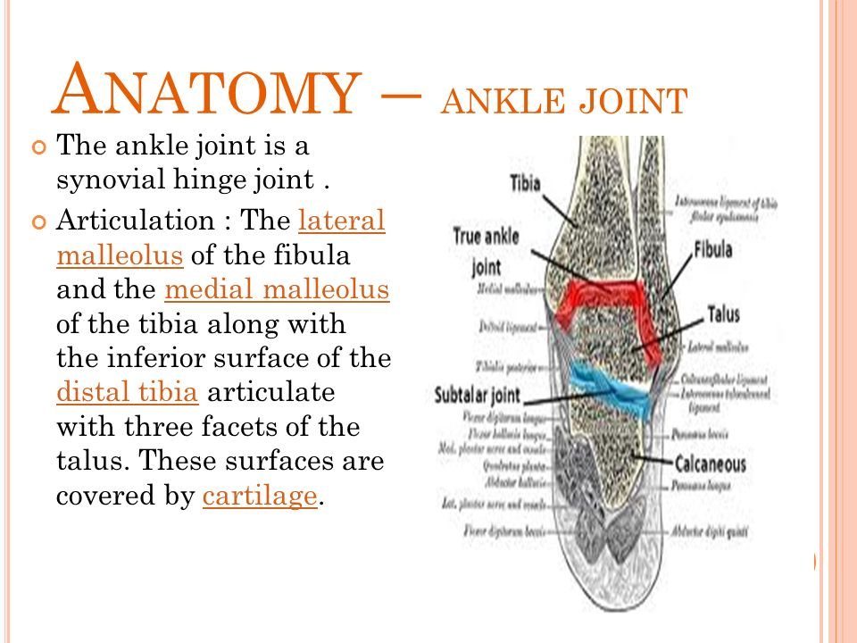 Ankle Foot Rawan Jaradat Done By Medical Ppt Ppt Video Online
