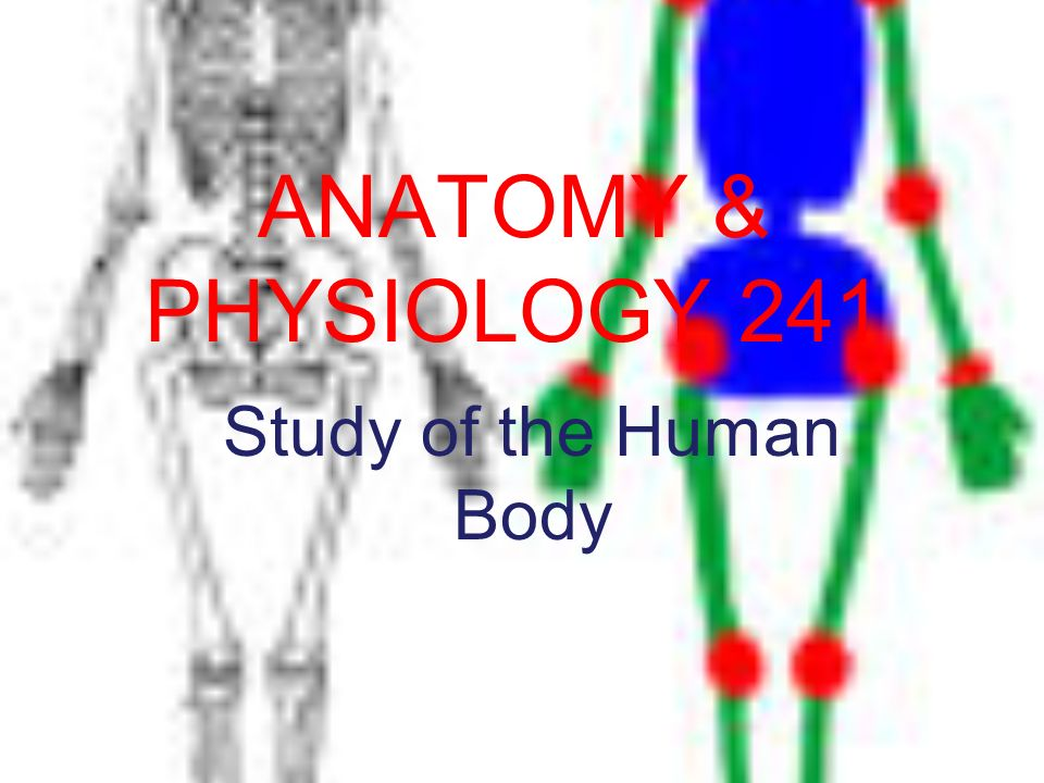 ANATOMY & PHYSIOLOGY 241 Study of the Human Body