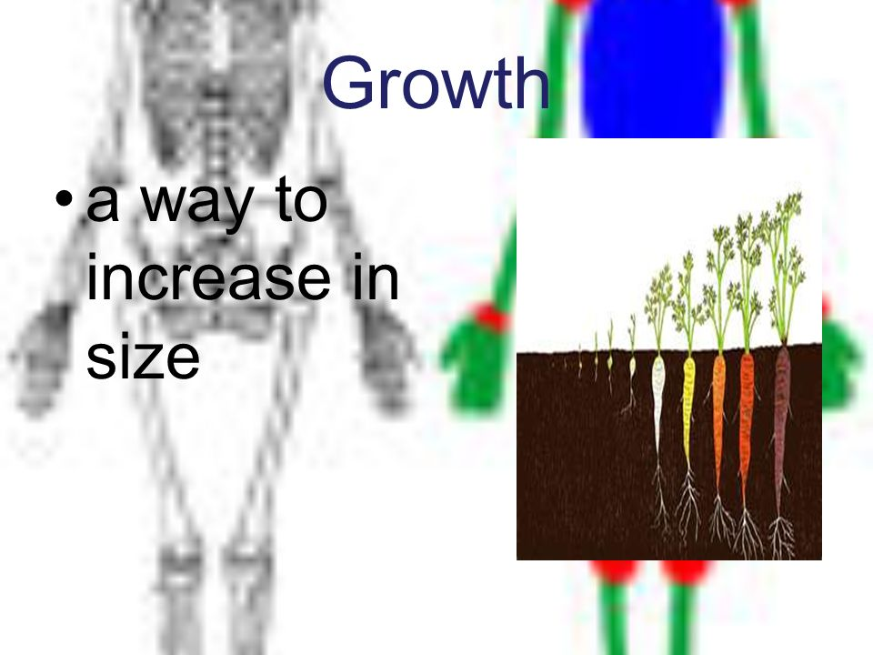 Growth a way to increase in size