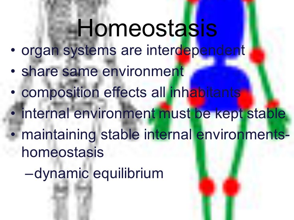 Homeostasis organ systems are interdependent share same environment