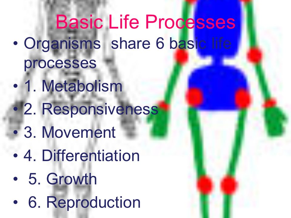 Basic Life Processes Organisms share 6 basic life processes