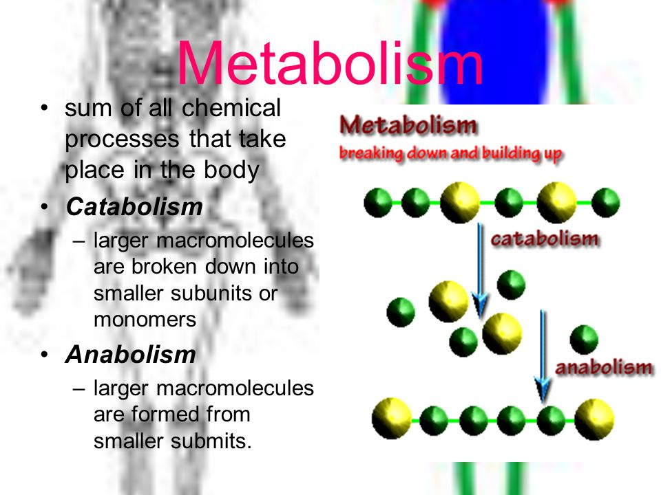 Metabolism sum of all chemical processes that take place in the body