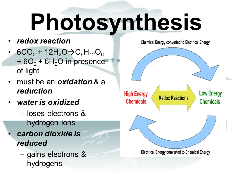 Photosynthesis redox reaction