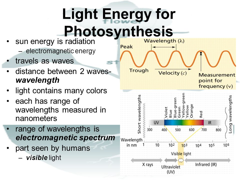 Light Energy for Photosynthesis
