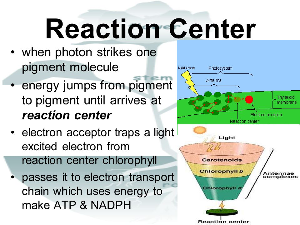 Reaction Center when photon strikes one pigment molecule