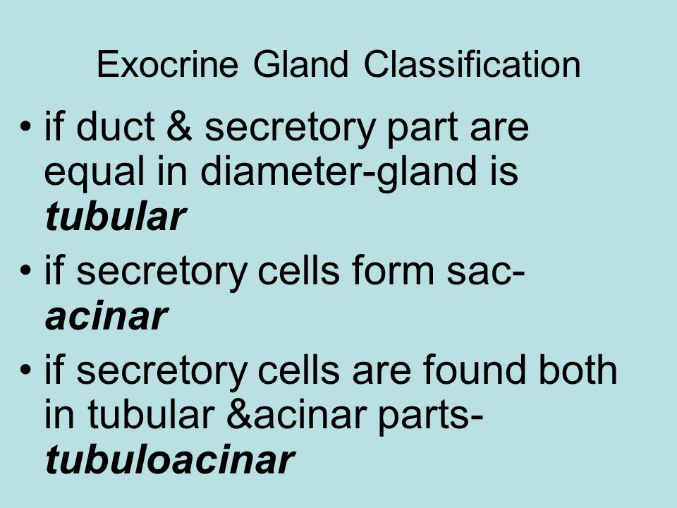 Exocrine Gland Classification