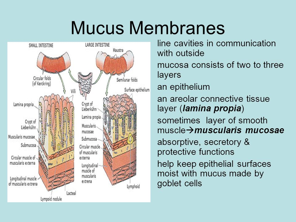 Mucus Membranes line cavities in communication with outside