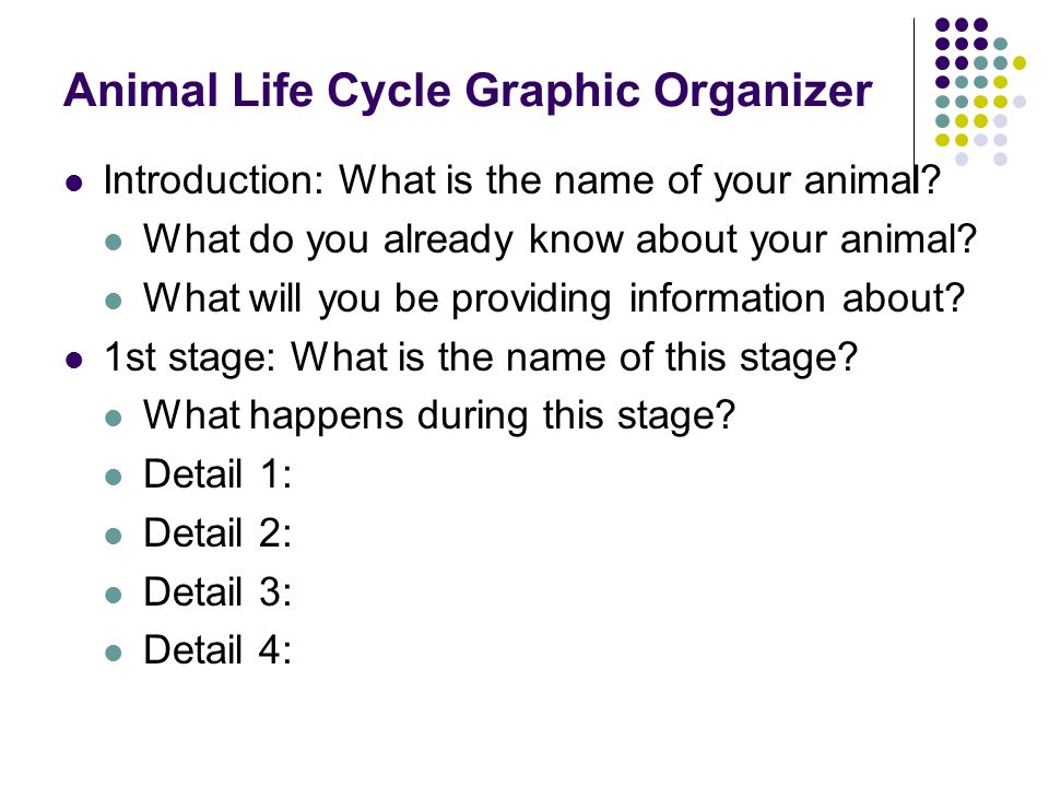 Animal Life Cycle Graphic Organizer