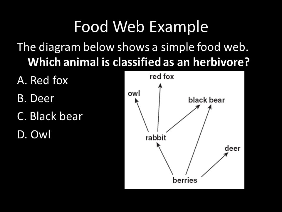 sci 230 individual food web diagram 27042018 desert food web diagram :  find this pin and more on nature science art lessons by marlisahk  food web diagram  an ecosystem can be defined as a more or desert food chain.