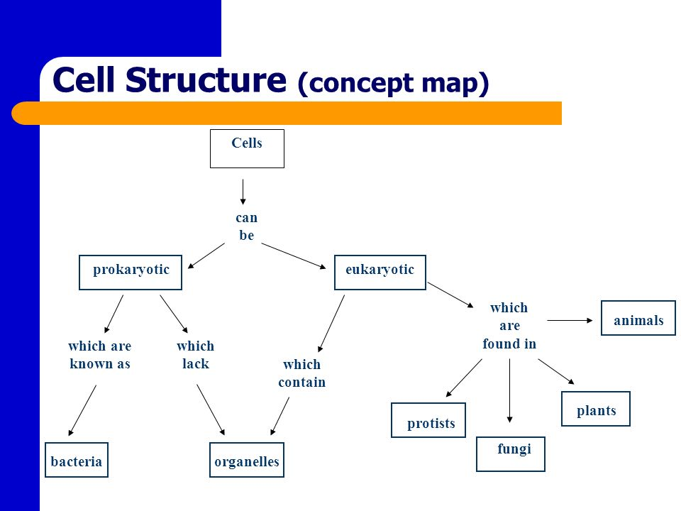 Bacterial Cell Wall Concept Map.Cell Structure Function Ppt Video Online Download
