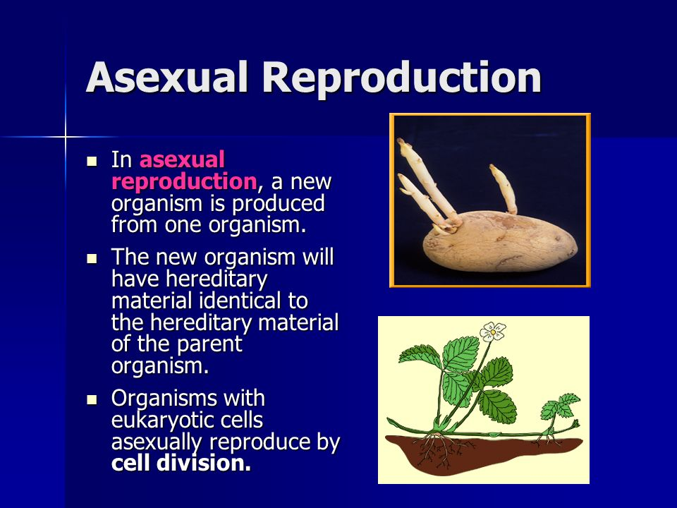 Materii asexual reproduction