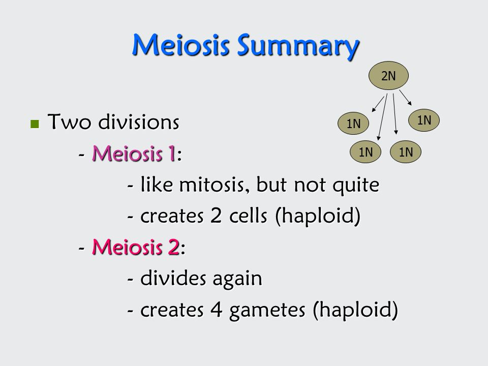 Cell Division Meiosis. - ppt download