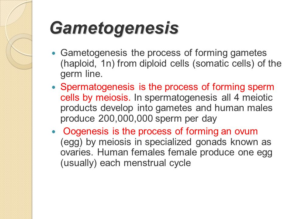 Gametogenesis Gametogenesis the process of forming gametes (haploid, 1n) from diploid cells (somatic cells) of the germ line.
