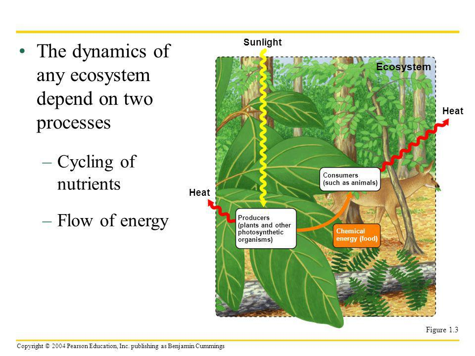 The dynamics of any ecosystem depend on two processes
