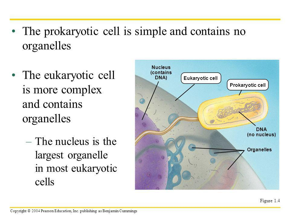 The prokaryotic cell is simple and contains no organelles