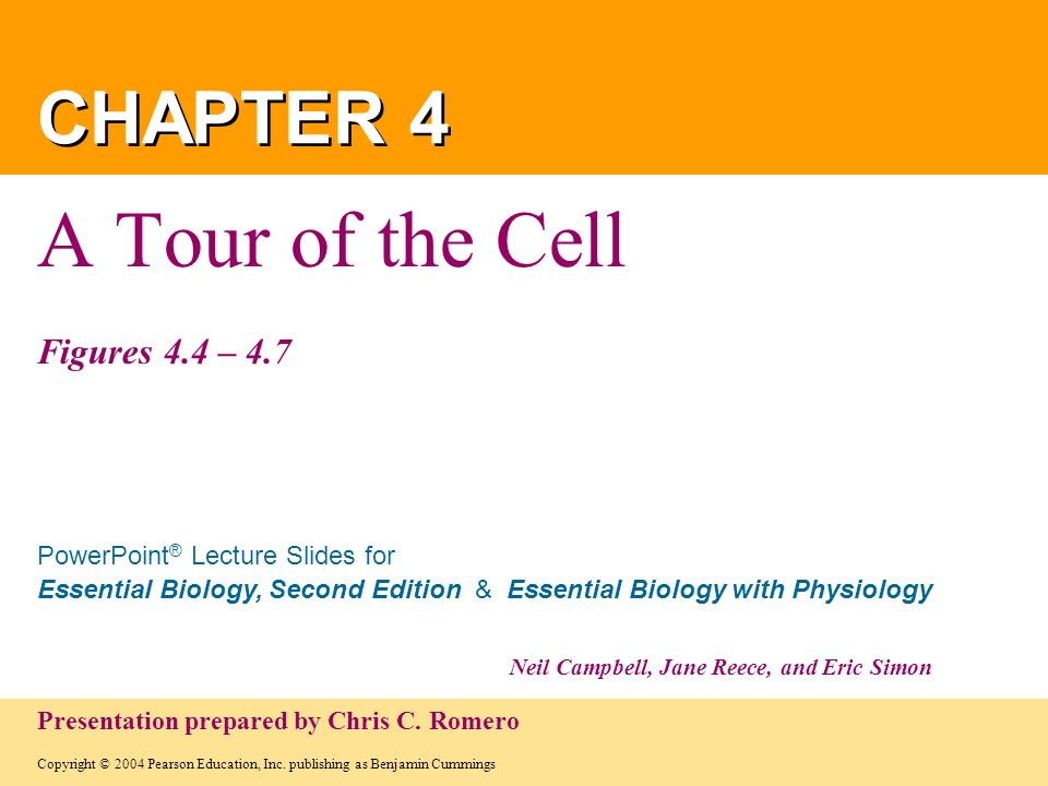 A Tour of the Cell Figures 4.4 – 4.7