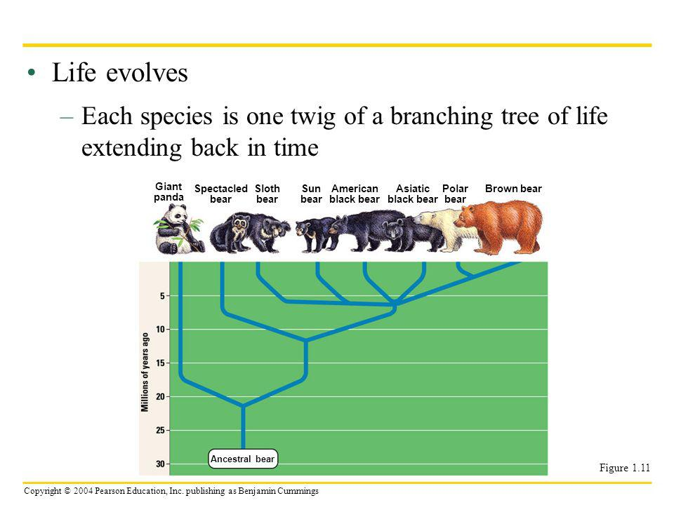 Life evolves Each species is one twig of a branching tree of life extending back in time. Giant. panda.