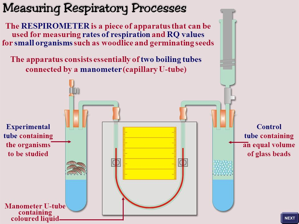 6 the respirometer