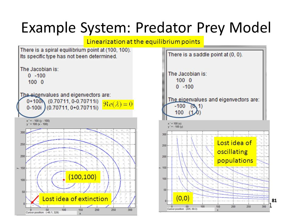 Example System: Predator Prey Model - ppt video online download