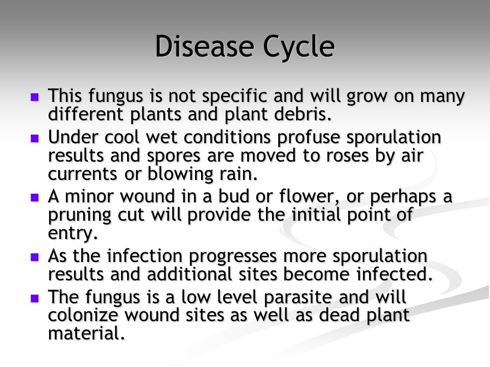 Disease Cycle This fungus is not specific and will grow on many different plants and plant debris.