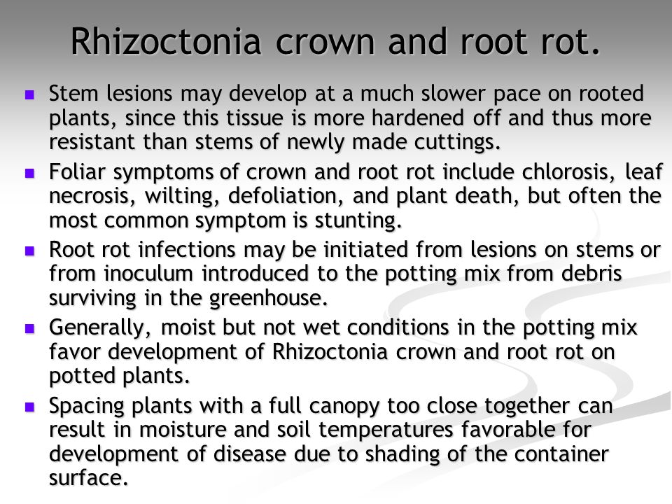 Rhizoctonia crown and root rot.
