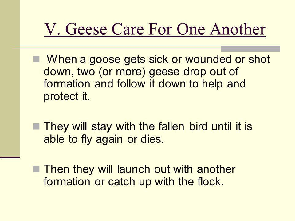 V. Geese Care For One Another