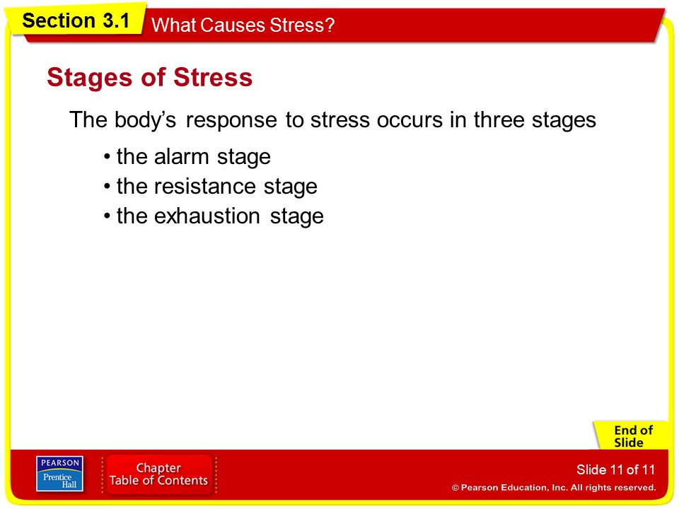 stages of stress response
