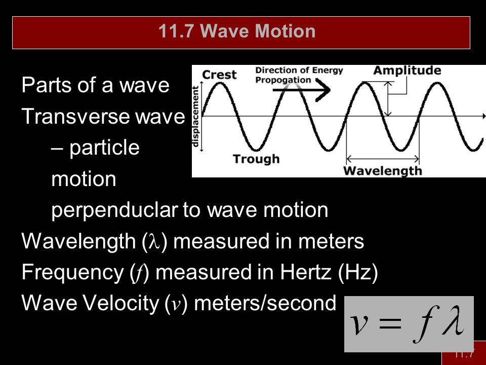 perpenduclar to wave motion Wavelength (l) measured in meters