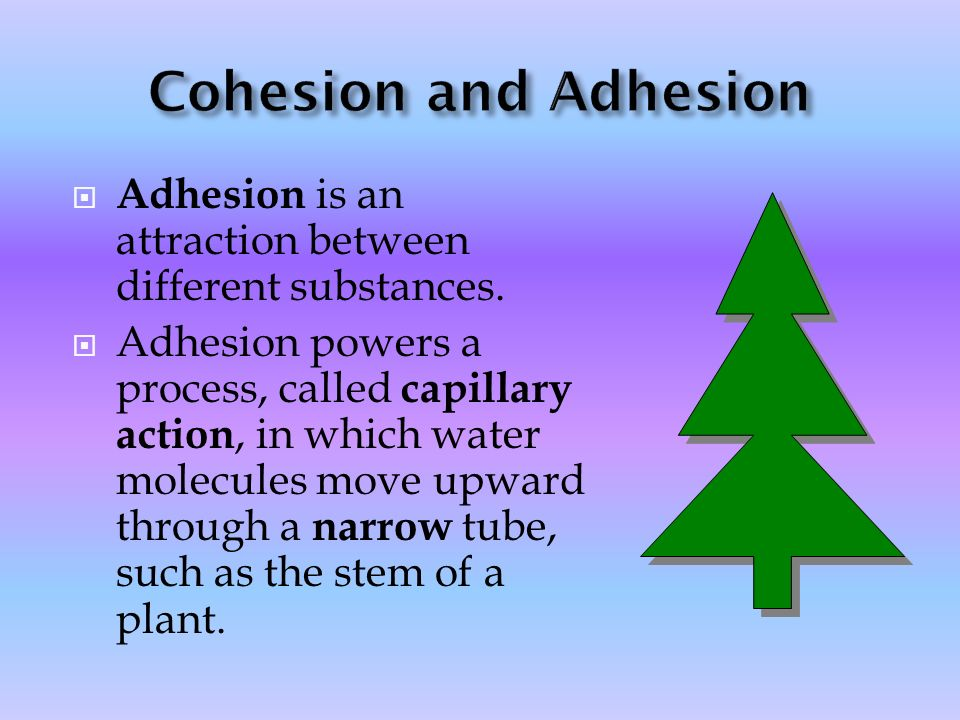 Cohesion and Adhesion Adhesion is an attraction between different substances.