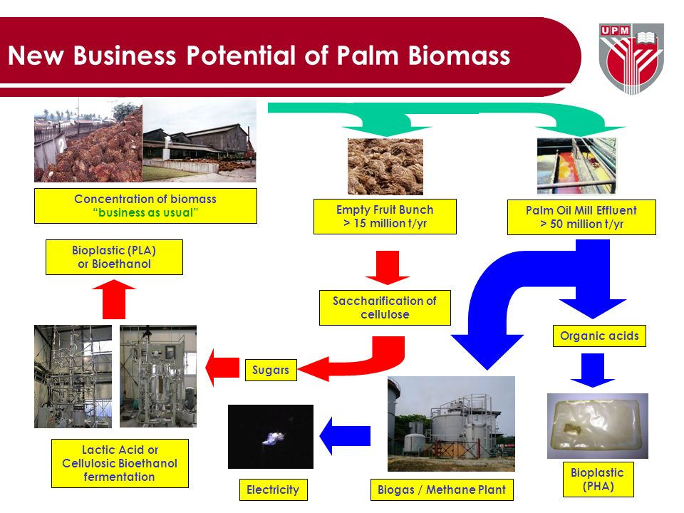 PALM BIOMASS UTILISATION IN MALAYSIA FOR THE PRODUCTION OF
