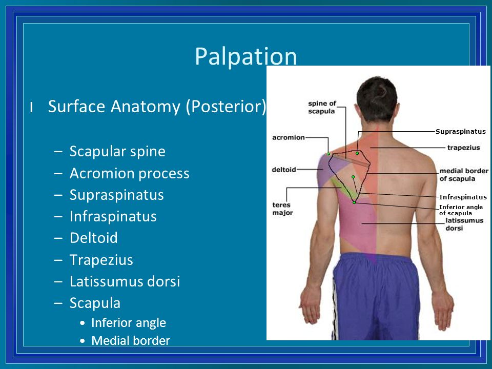 History Physical Examination Of The Shoulder Ppt Download
