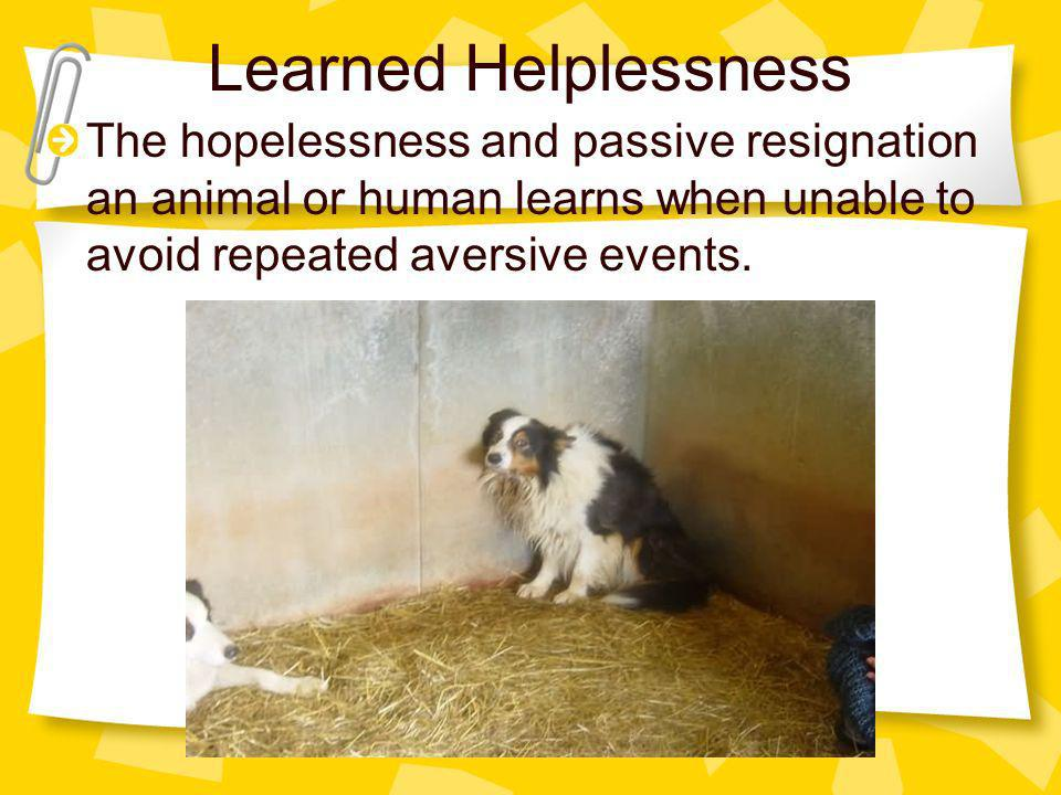 Learned Helplessness The hopelessness and passive resignation an animal or human learns when unable to avoid repeated aversive events.