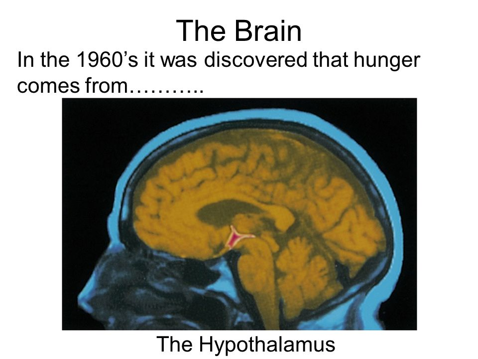 The Brain In the 1960's it was discovered that hunger comes from………..