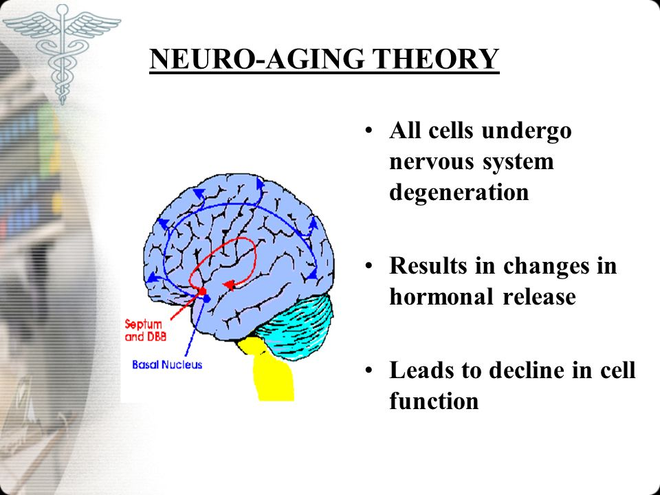NEURO-AGING THEORY All cells undergo nervous system degeneration