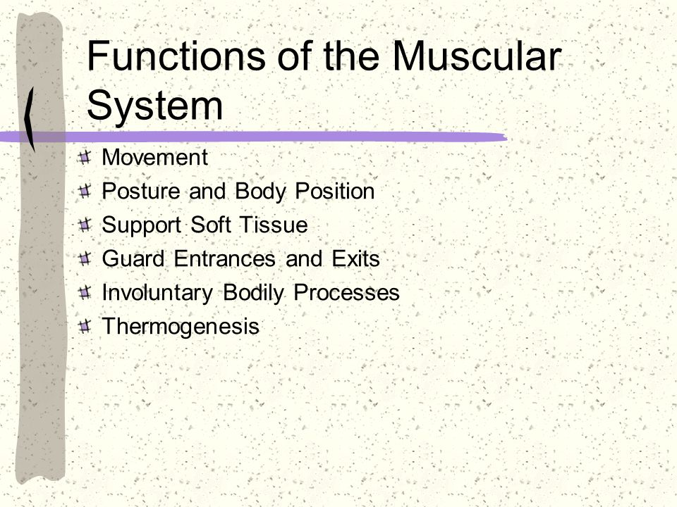 Anatomy / Physiology Overview - ppt video online download