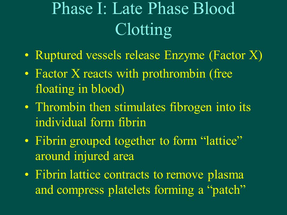 Phase I: Late Phase Blood Clotting