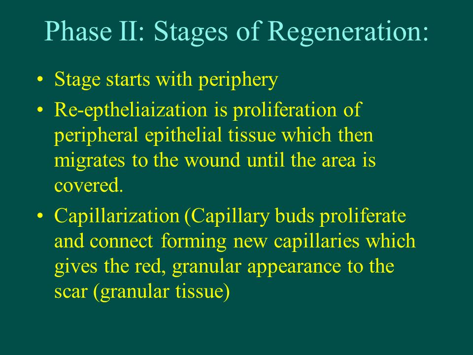 Phase II: Stages of Regeneration: