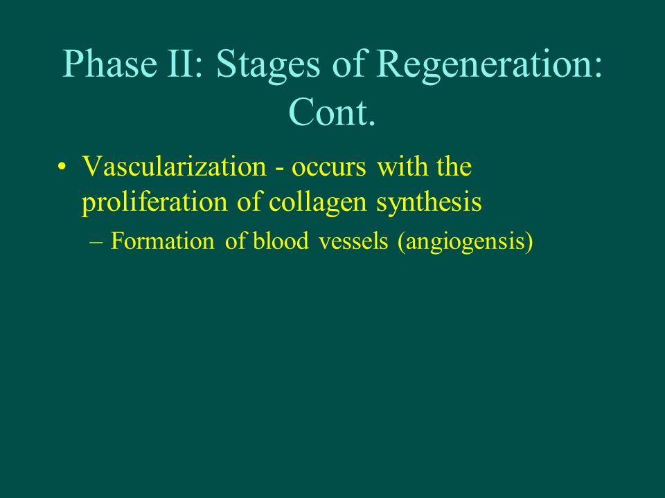 Phase II: Stages of Regeneration: Cont.
