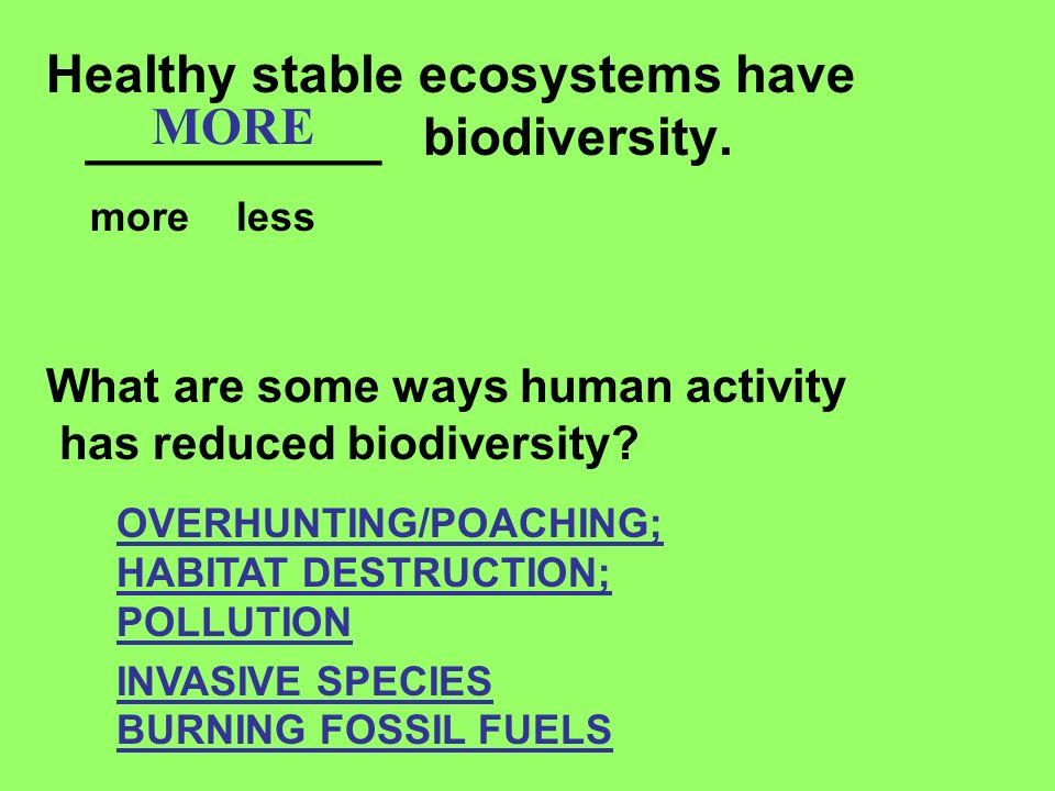 Healthy stable ecosystems have __________ biodiversity. more less MORE