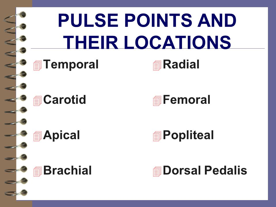 PULSE POINTS AND THEIR LOCATIONS