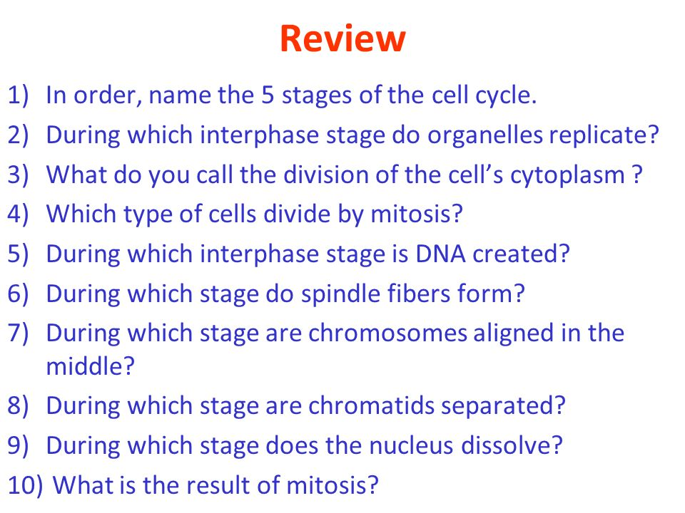 Review In order, name the 5 stages of the cell cycle.