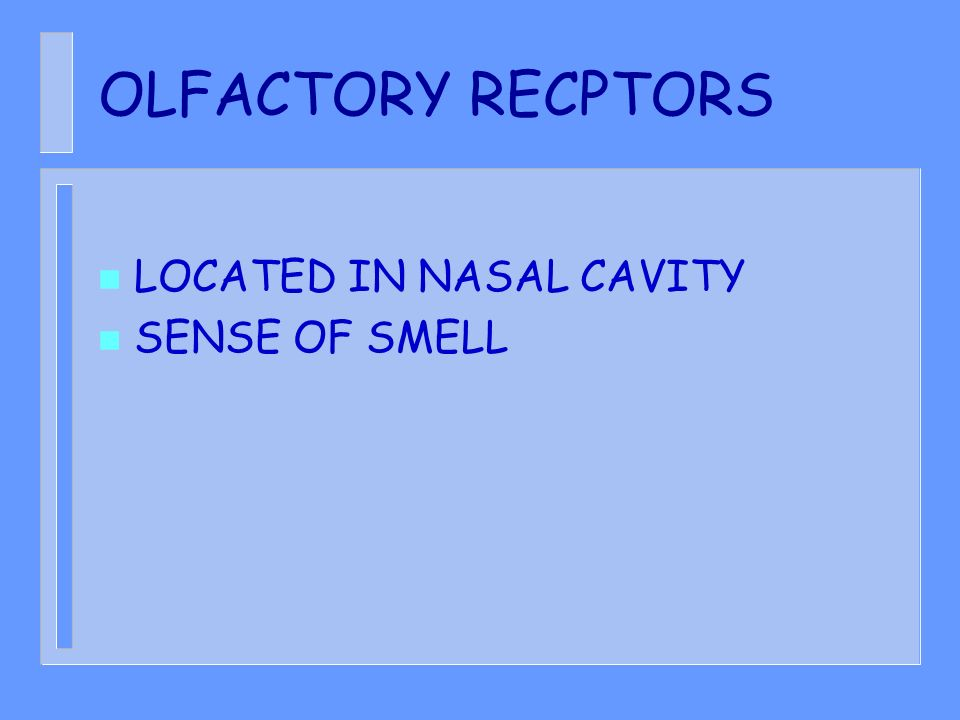 OLFACTORY RECPTORS LOCATED IN NASAL CAVITY SENSE OF SMELL