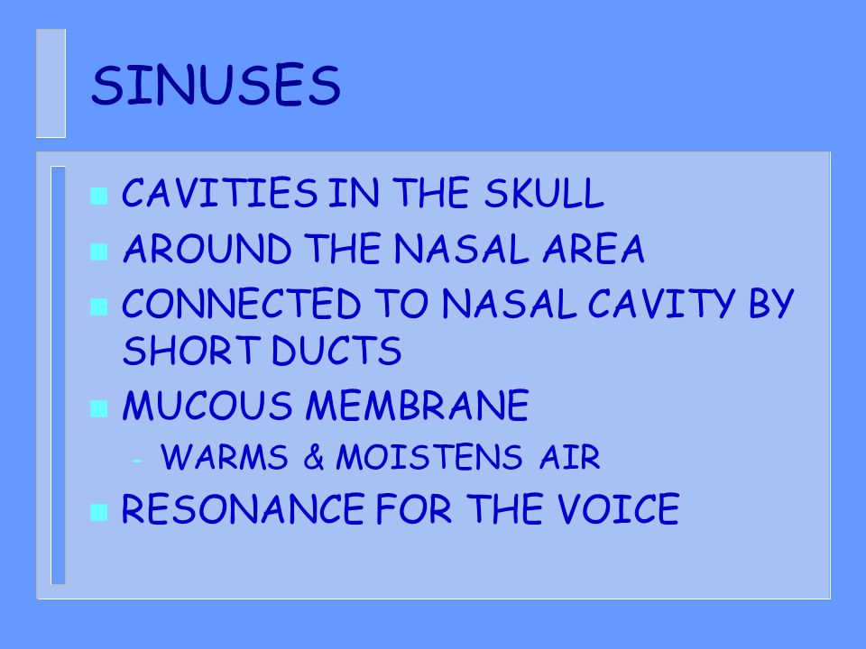 SINUSES CAVITIES IN THE SKULL AROUND THE NASAL AREA