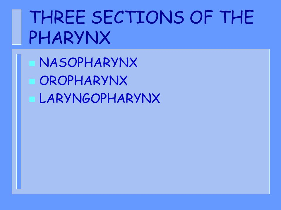 THREE SECTIONS OF THE PHARYNX